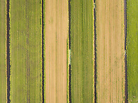 Aerial view of fields in Netherlands.