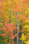 Fall colors in Glacier National Park, Montana.