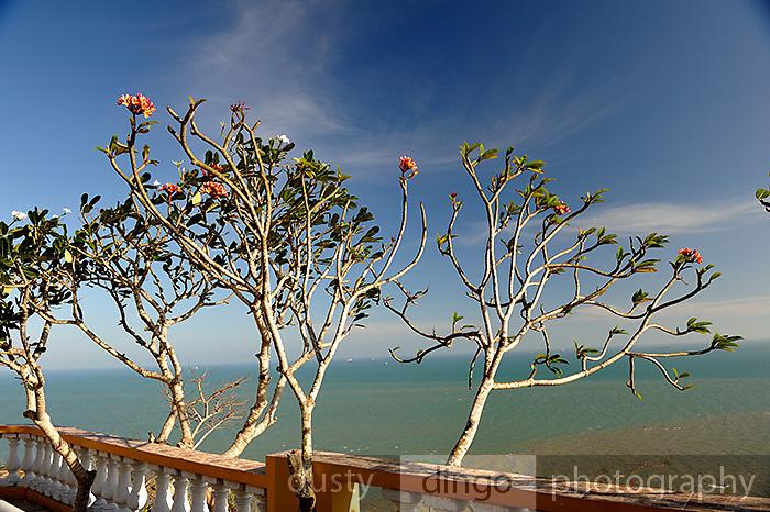Frangipani trees and balcony overlooking the South China Sea. Vung Tau, Vietnam