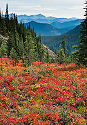 In Mount Rainier National Park, the Naches Peak Loop Trail is a 5 mile loop starting near Chinook Pass on Highway 410 between Enumclaw and Yakima, Washington, USA.