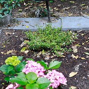 NLD/Amsterdam/20110729 - Begraafplaats Zorgvlied, graf Hans van Mierlo