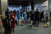 New York, NY - 16 February 2015. Dogs and their handlers await their turns to enter the ring at the 139th Westminster Kennel Club Dog Show.