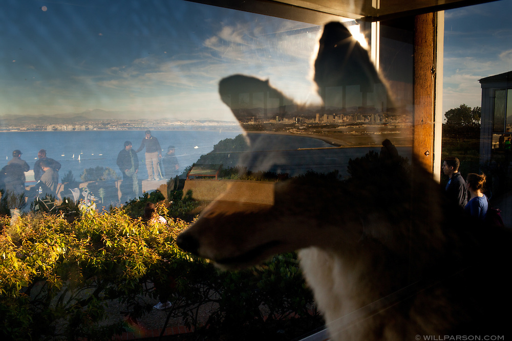 At Cabrillo National Monument in San Diego, Calif., a stuffed coyote is part of a natural history display in the gift shop.