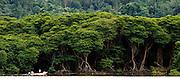 Tropical rainforest borders the city limits, Bandar Seri Begawan, Brunei