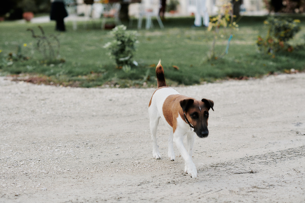 A dog named Gribouille at Maison Caulieres' farm. Dolus-le-Sec, France. October 7, 2019.