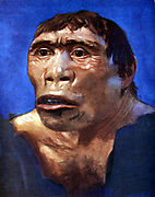 Reconstruction of Java Man (Pithecanthropus erectus) based on skull cap, thigh bone and 2 back teeth discovered in Pliocene fossil beds in Trinil, Central Java, by Dr Eugene Dubois in 1894.