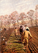 Winter ploughing with horses. The man leading the horse is wearing a smock, a traditional agricultural worker's garment.   Kronheim chromolithograph from 'Pictures from Nature' by Mary Howitt (London, 1869).