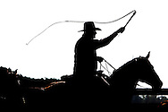 Photo Randy Vanderveen.Near Debolt, Alberta, July 22/08.A silhouetted cowboy cracks the whip over the head of cattle he is driving. The noise of the whip and not being struck is what gets the animals moving where the handler wants.