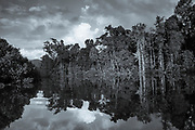Daintree Rainforest, Australia<br /> FINE ART PHOTOGRAPHY by Tim Graham