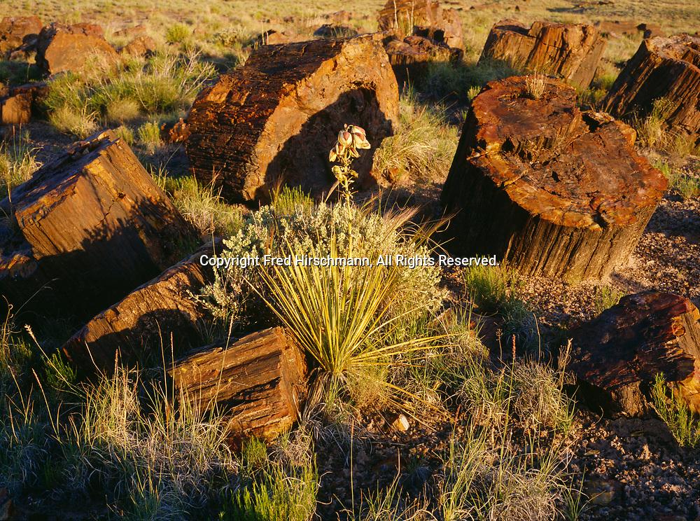 Petrified logs, Rainbow Forest, Petrified Forest National Park, Arizona.