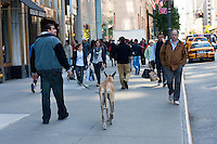 New York in October 2008