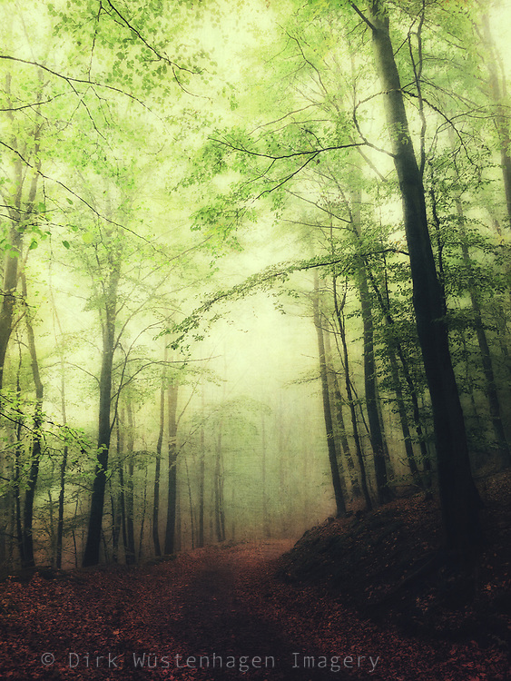 Hike through a forest on an October day