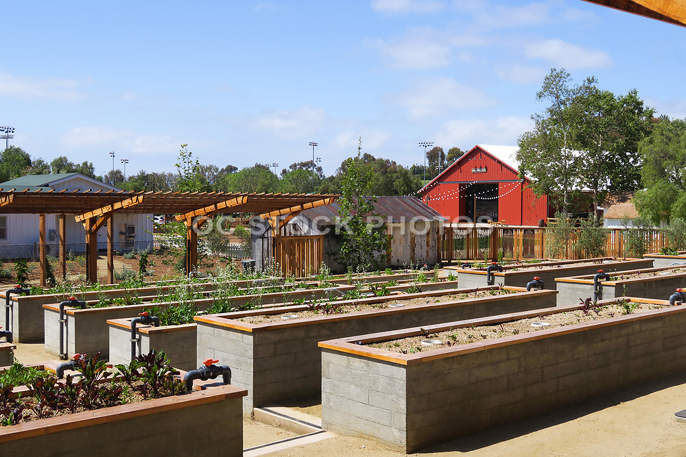 Raised Garden Beds with Fresh Produce