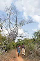 Coastal thicket vegetation with a baobab and sandy track running through it and habitat for the Green Tinkerbird, Unguane, Inhambane Province, Mozambique
