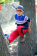 Hmong boy age 8 sitting in tree. Hmong Sports Festival McMurray Field St Paul Minnesota USA