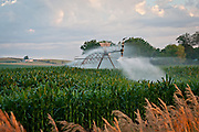 A center-pivot irrigation system sprays a field of young corn at dawn.