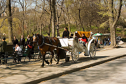 New York City, New York: Horse carriage ride in Central Park  .Photo #: ny260-14695  .Photo copyright Lee Foster, www.fostertravel.com, lee@fostertravel.com, 510-549-2202.