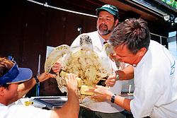 volunteers rub algae off from .green sea turtle, Chelonia mydas, .Marine Center of Juno Beach, Florida.