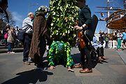 May Day custom of Deptford Jack in the Green, a man encased in a framework entirely covered with greenery, is one of the lesser-known modern revivals by the Blackheath Morris Men of English traditional customs on May 1st 2016 in London, United Kingdom. Working its route along the river, the Jack reaches Greenwich, underneath the masts of the Cutty Sark. Fowlers Troop Jack in the Green was revived in the early 1980s. Originally a revival from about 1906, it developed from the 17th Century custom of milkmaids going out on May Day with the utensils of their trade, decorated with garlands of flowers and piled into a pyramid which they carried on their heads. By the mid eighteenth century other groups, notably chimney sweeps, were moving in on the milkmaids territory as they saw May Day as a good opportunity to collect money, so carried a Jack in the Green. Over the last 25 years several popular festivals have grown up around the Jack in the Green tradition. Deptford Jack in the Green is not very widely known although it has been running since the early 1980s.