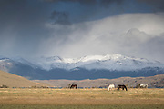 Horses grazing on pasture and snowcapped mountains, Torres del Paine National Park, Chile