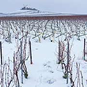 Winter workers performing maintanence at Mailly vineyards at Champagne Mumm at Mailly vineyard.G. H. Mumm & Cie, situated in Reims in northern France, is one of the largest Champagne producers and it is currently ranked 3rd globally based on number of bottles sold. The company is owned by Pernod Ricard.