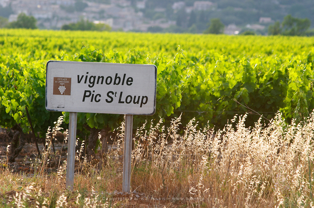 Vignoble Pic St Loup, the vineyards of the Pic St Loup. Pic St Loup. Languedoc. France. Europe.