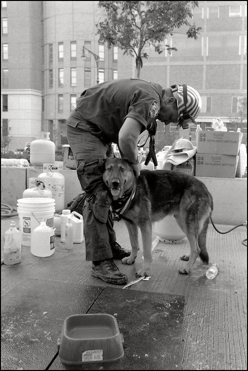Within hours of the Sept. 11 attacks, thousands of rescue workers from across America deployed to ground zero to help in the search and rescue efforts. Joining the endeavor, were approximately 300 dogs specially trained in search and rescue.<br /> Veterinary Medical Assistance Teams (VMATs) were deployed for the first time by the federal government to maintain the health of service dogs canvassing the area for the missing.