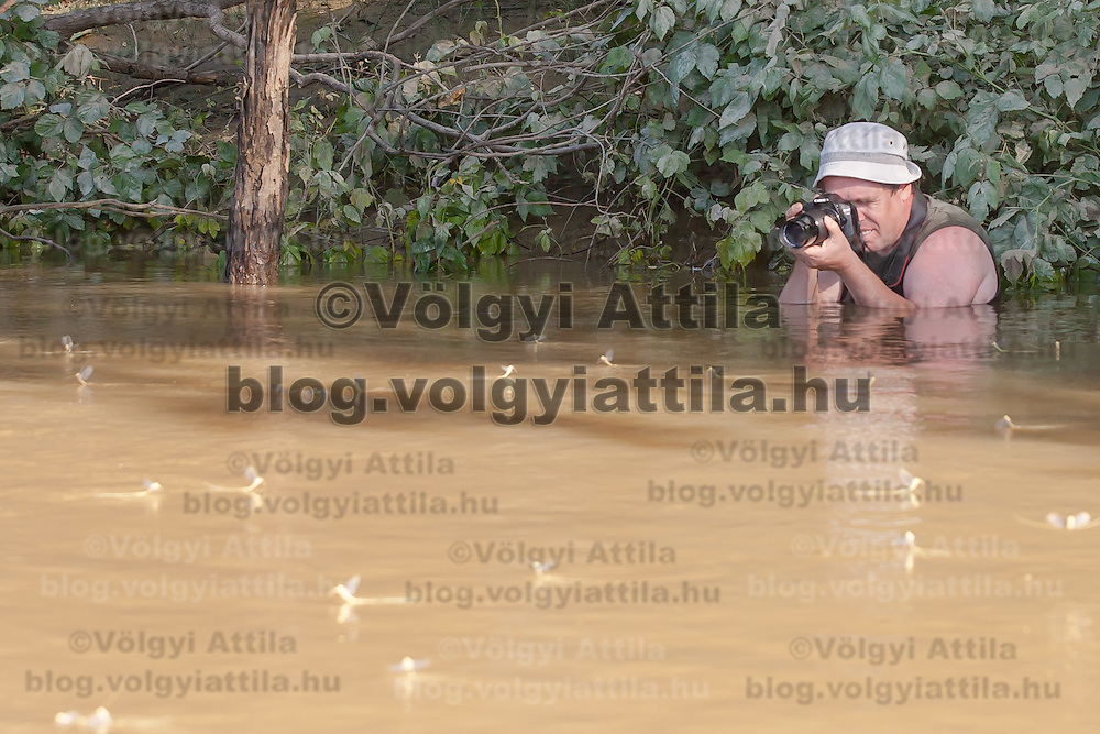 Tourist photographs the yearly swarming of the long-tailed mayfly (Palingenia longicauda) called Tiszaviragzas (Blooming of Tisza) on the river Tisza in Tiszainoka (some 135 km south-east from Budapest), Hungary on June 20, 2012. ATTILA VOLGYI