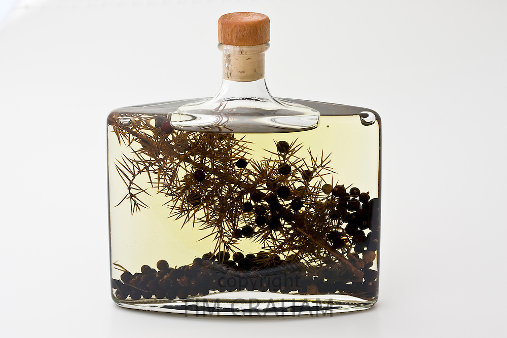 Bottle of herb-infused olive oil with juniper berries, London, England, United Kingdom