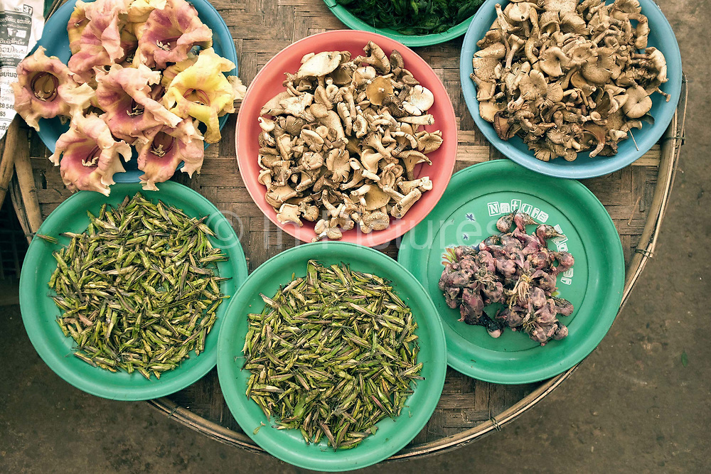 Local produce including wild dok kare flowers, grass hoppers, birds and mushrooms for sale at Hua Kua evening market on the outskirts of Vientiane, Lao PDR. A large variety of local products are available for sale in fresh markets all over Laos, all being sold on small individual stalls.