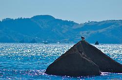 Não são apenas os turistas que aproveitam das belezas de Cathedral Cove. Pássaros se abrigam nas rochas dentro do ar a espera do momento exato para conseguir a comida do dia. FOTO: Lucas Uebel/Preview.com