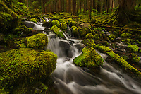 Small cascade spilling out of the lush Sol Duc Rainforest, Olympic National Park, Washington, USA