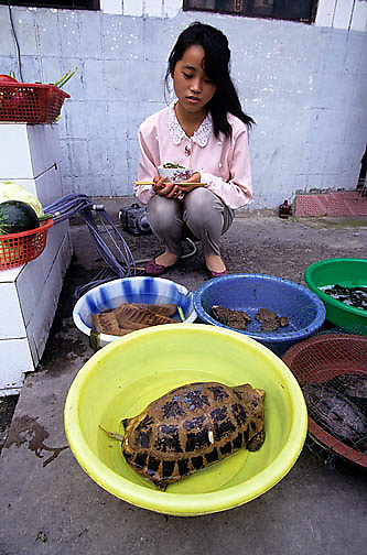 China, Cities, Turtles and frogs displayed at street market in city.