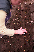 A913J9 Young girl planting seeds in vegetable garden