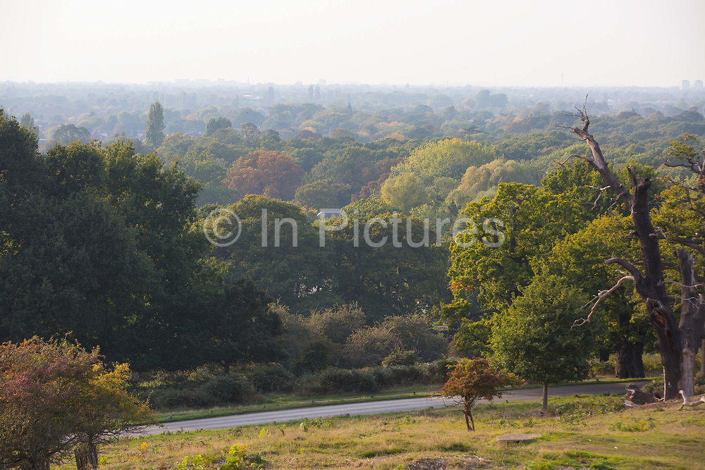 Richmond park on 4th October 2015 in London, United Kingdom. Situated in the London Borough of Richmond upon Thames, Richmond Park was created by Charles I in the 17th century as a deer park. It's the largest park of the London's eight Royal Parks and covers an area of 2500 acres.