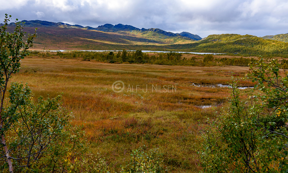 Hovden nature reserve in Setesdalen (Agder, Norway) looking towards Vidmyr and Lislevatn. Photo from September.