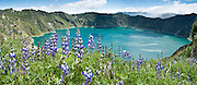 """Lupine flowers bloom above beautiful Lake Quilotoa, Ecuador, South America. Quilotoa, a tourist site of growing popularity, is a scenic water-filled caldera that is the westernmost volcano in the Ecuadorian Andes. The 3 kilometers (2 mile) wide caldera (diameter about 9km) was formed by the collapse of this dacite volcano following a catastrophic VEI-6 eruption about 800 years ago, which produced pyroclastic flows and lahars that reached the Pacific Ocean, and spread an airborne deposit of volcanic ash throughout the northern Andes. The caldera has since accumulated a 250 meter (820 foot) deep crater lake, which has a greenish color from dissolved minerals. Fumaroles are found on the lake floor and hot springs occur on the eastern flank of the volcano. The route to the """"summit"""" (the small town of Quilotoa) is generally traveled by hired truck or bus from the town of Zumbahua 17 km to the South. Lupinus is a genus in the pea family (also called the legume, bean, or pulse family, Latin name Fabaceae or Leguminosae). Published in """"Light Travel: Photography on the Go"""" book by Tom Dempsey 2009, 2010. Panorama stitched from 3 overlapping images."""
