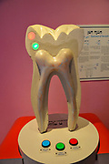 Teeth exhibition at Madatech, Israeli National Museum of Science Technology and Space, Haifa, Israel