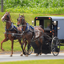 Two Horse Amish Buggy