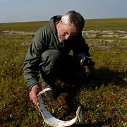 Research biologist with the USGS of the Alaska Science Center, George Durner working with Polar Bears International doing a survey to determine the denning range of Polar Bears in the Arctic National WIldlife Refuge(ANWR) Alaska. He finds descarded radio collar, which they determine to be from a female Polar Bear (Ursus maritimus) that may have died in the den.