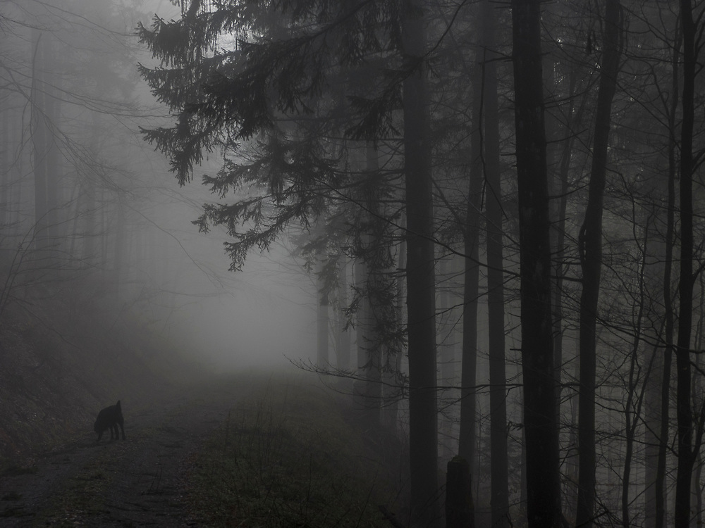 Silhouette of trees and dog in Black Forest, Baden-Wurttemberg, Germany