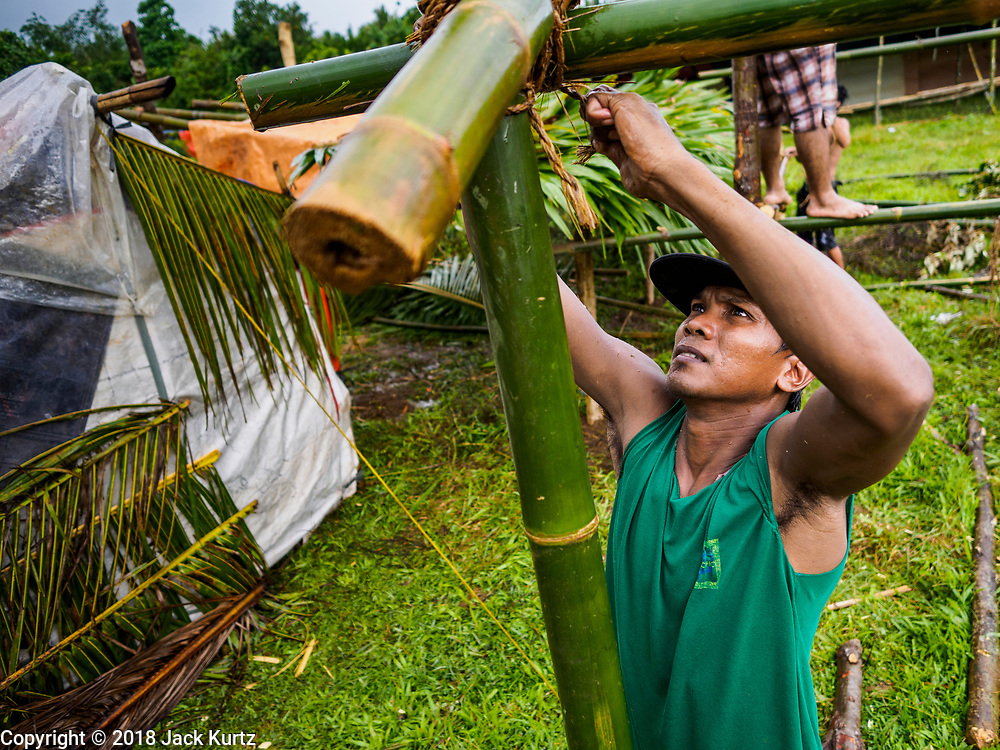 26 JANUARY 2018 - SANTO DOMINGO, ALBAY, PHILIPPINES: A man evacuated from his home on the slopes of the Mayon volcano builds a temporary shelter in a field in Santo Domingo. The volcano was relatively quiet Friday, but the number of evacuees swelled to nearly 80,000 as people left the side of  the volcano in search of safety. There are nearly 12,000 evacuees in Santo Domingo, one of the communities most impacted by the volcano. The number of evacuees is impacting the availability of shelter space. Many people in Santo Domingo, on the north side of the volcano, are sleeping in huts made from bamboo and plastic sheeting. The Philippines is now preparing to house the volcano evacuees for up to three months.        PHOTO BY JACK KURTZ