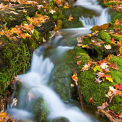 A small stream flows over moss-covered rocks in Vermont's Green Mountains.