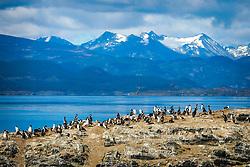 Ilha dos Pássaros no Canal de Beagle na região de Ushuaia, Argentina. FOTO: Jefferson Bernardes/ Agência Preview