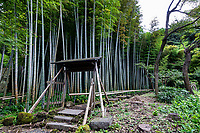 """Bamboo Grove at Eishoji - Eisho-ji is the only convent remaining in Kamakura and was built in the early Edo Period in 1636.  Its full name is Tokozan Eishoji but it is almost always called just Eishoji.  It's nickname is the """"flower temple"""" though it is most noteworthy for its bamboo grove and cave niches with buddha statues inside.   Eishoji was founded as a nunnery by Okatsu, the temple's named was derived from her nun name Eiisho-in."""