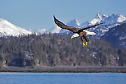 """Photographs from the """"Bald Eagles of Alaska"""" photo tour"""