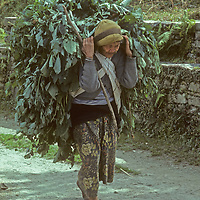 An elderly Nepali woman carries a load of tree leaves to feed her animals, creating deforestation in order to survive.