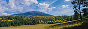 San Francisco Peaks rise behind aspens and ponderosa pines in fall on the Colorado Plateau in northern Arizona