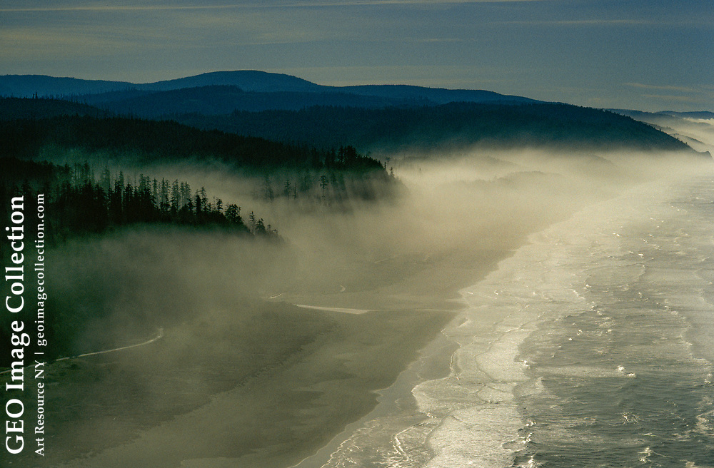 Fog rolls in from the Pacific, providing the redwood forest with nourishing moi sture.