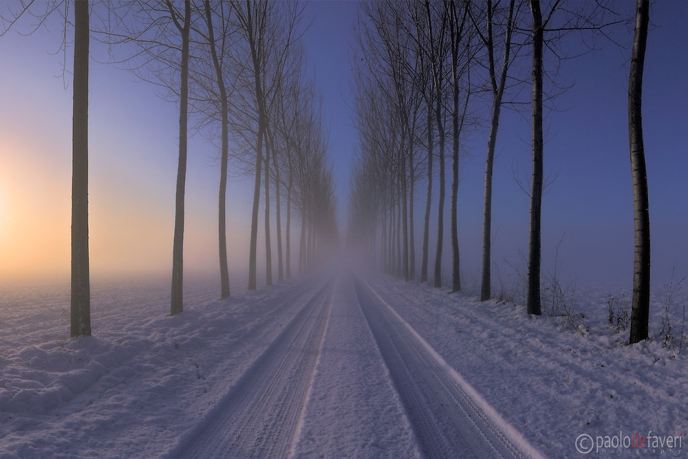 A tree alley and a road in the country side nearby Castagnole in Piedmont, Italy, as seen at dawn on a utterly cold and foggy morning of January. This is stitched from six vertical takes.